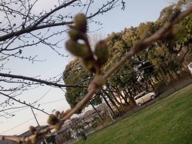 2010_0320_163138-CIMG0384.jpg
