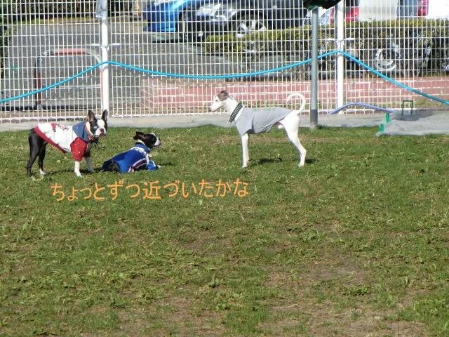 2010_1119_114448-CIMG2453.jpg