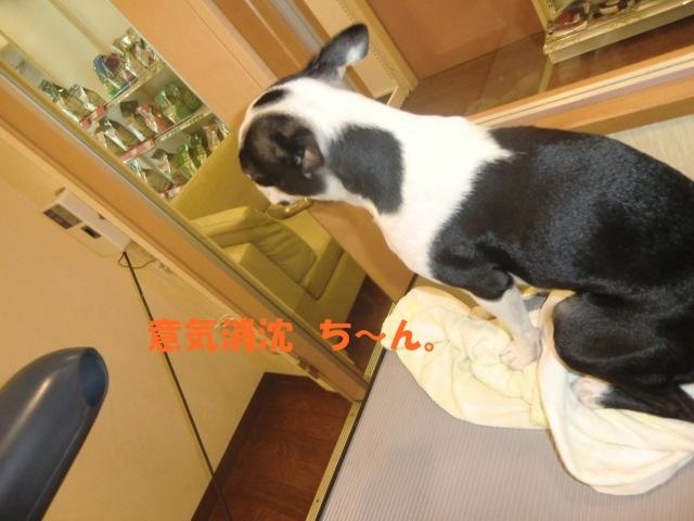 2010_1204_114343-CIMG2619.jpg