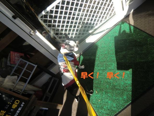 2010_1204_131028-CIMG2636.jpg