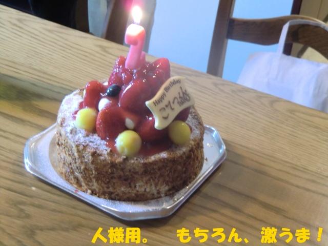 2010_1204_154648-CIMG2696.jpg