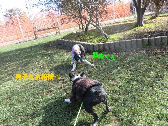 2011_0101_122340-CIMG3174.jpg