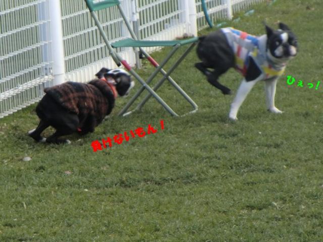 2011_0101_124743-CIMG3178.jpg