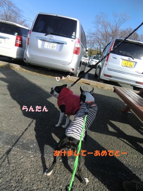 2011_0103_130345-CIMG3220.jpg