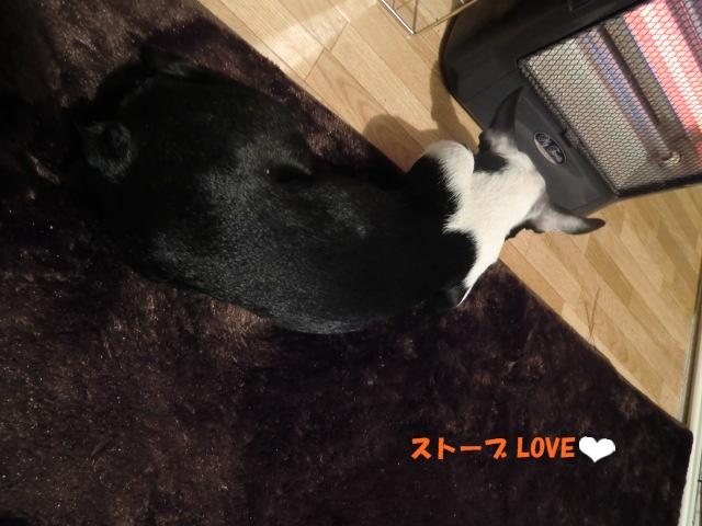 2011_0107_224212-CIMG3340.jpg