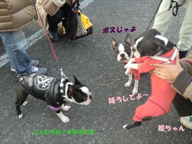 2011_0109_160432-CIMG3343.jpg