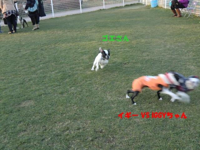2011_0109_162054-CIMG3354.jpg