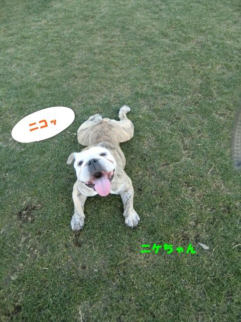 2011_0109_164233-CIMG3366.jpg