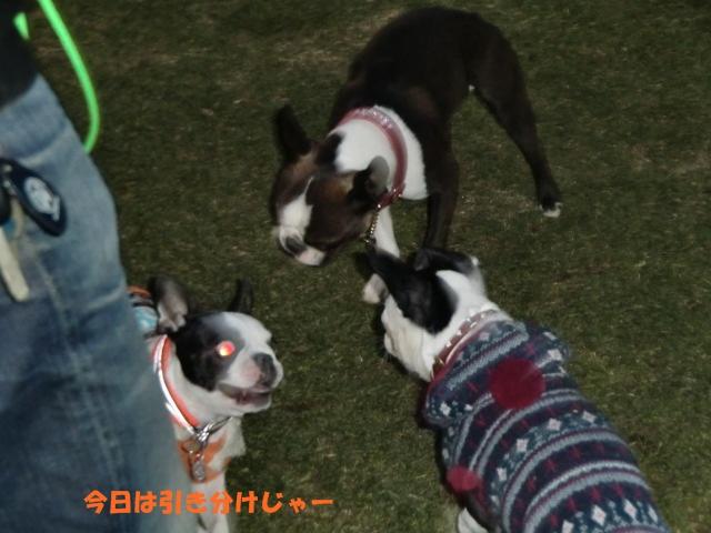 2011_0109_165849-CIMG3385.jpg
