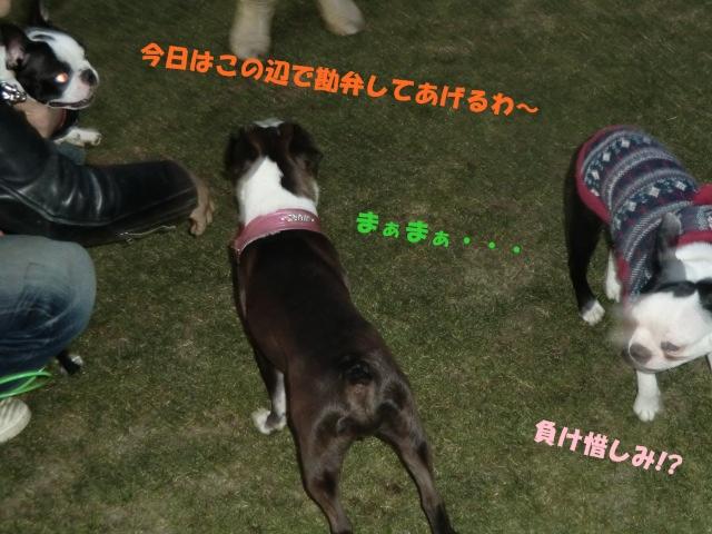 2011_0109_165919-CIMG3387.jpg