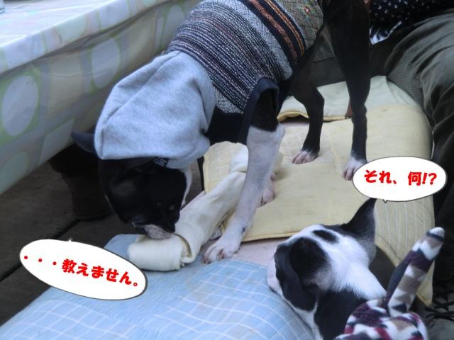 2011_0115_123424-CIMG3431.jpg