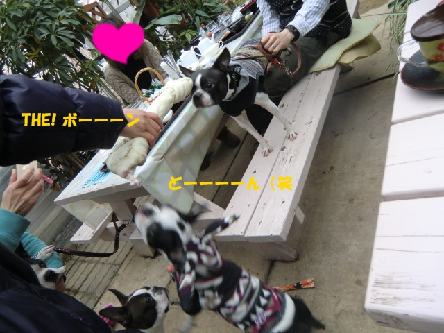 2011_0115_125452-CIMG3436.jpg