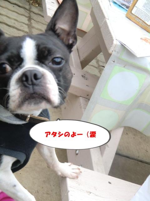 2011_0115_133614-CIMG3447.jpg