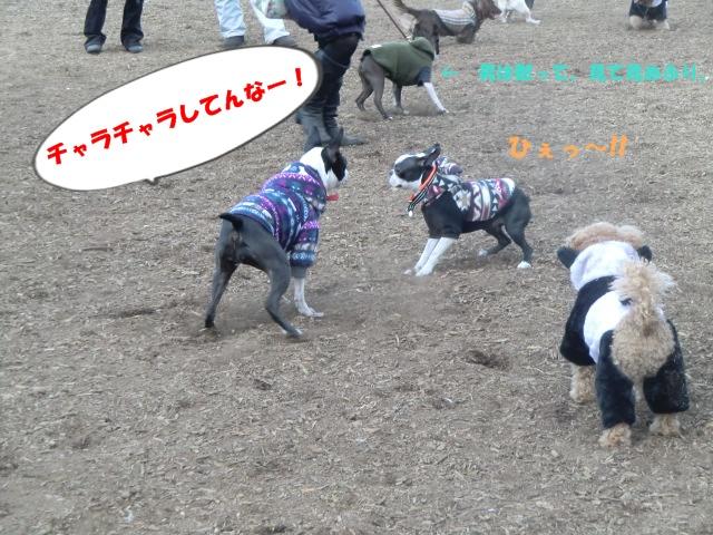 2011_0115_145031-CIMG3473.jpg