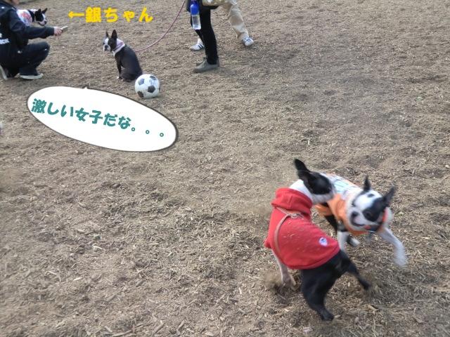 2011_0205_140740-CIMG3722.jpg
