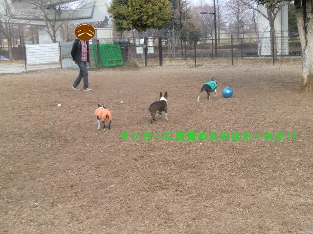 2011_0205_142209-CIMG3738.jpg