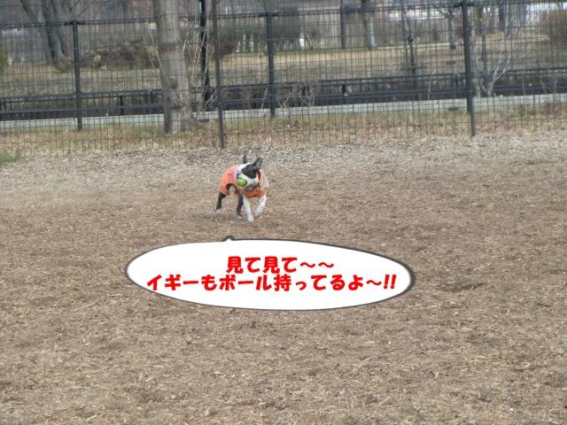 2011_0205_142306-CIMG3740.jpg