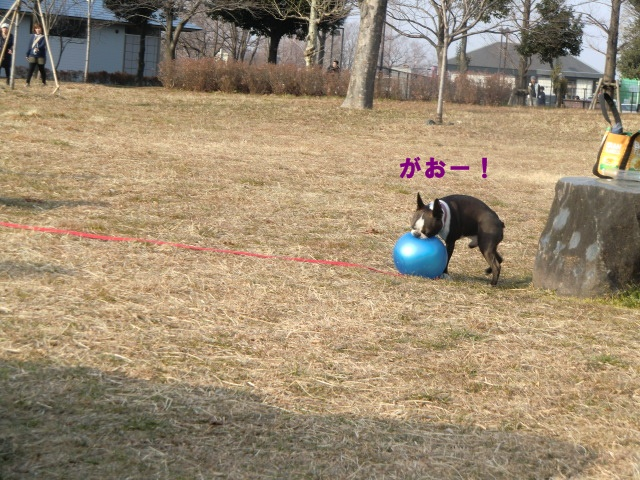 2011_0205_151656-CIMG3761.jpg
