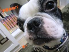 2011_0214_154551-CIMG3840.jpg