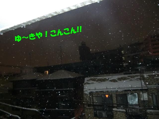 2011_0215_005618-CIMG3844.jpg