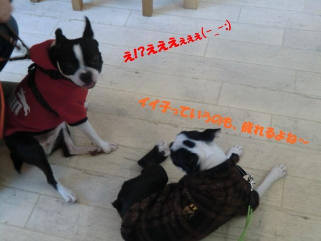 2011_0215_164630-CIMG3857.jpg