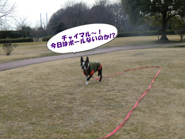 2011_0219_143719-CIMG3950.jpg