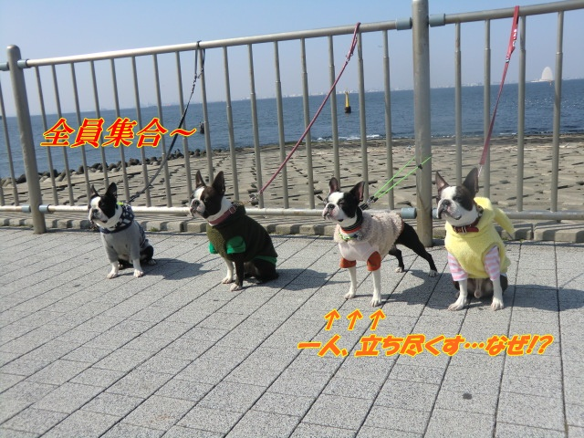 2011_0226_122643-CIMG4062.jpg