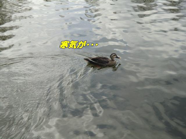 2011_0302_124746-CIMG4277.jpg