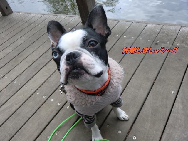 2011_0302_124917-CIMG4278.jpg
