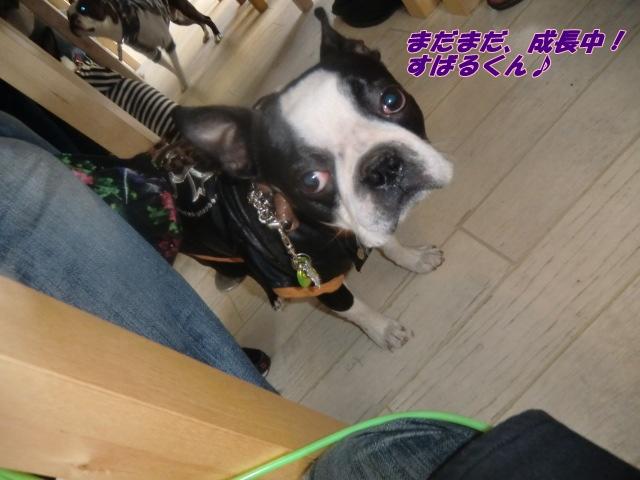 2011_0327_163126-CIMG4514.jpg