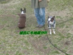 2011_0327_172946-CIMG4530.jpg