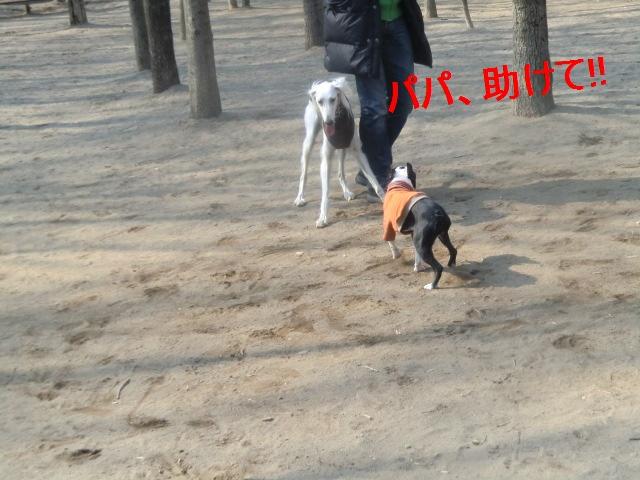 2011_0330_090443-CIMG4534.jpg