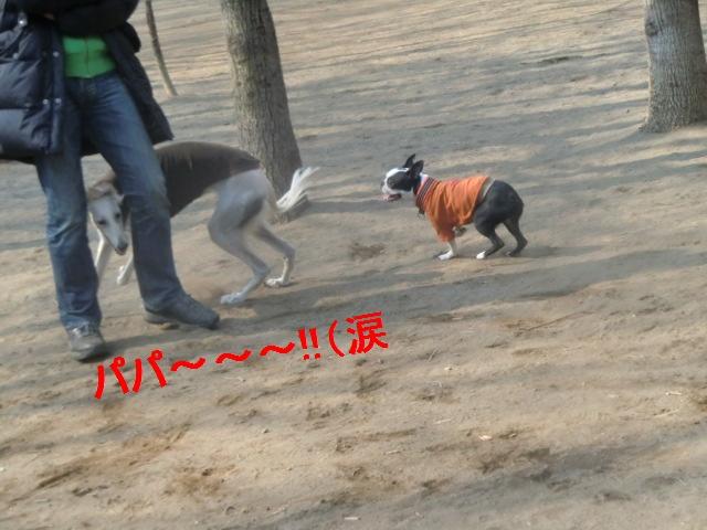 2011_0330_090449-CIMG4535.jpg