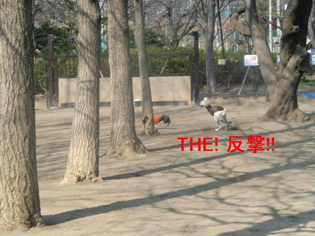 2011_0330_090457-CIMG4536.jpg