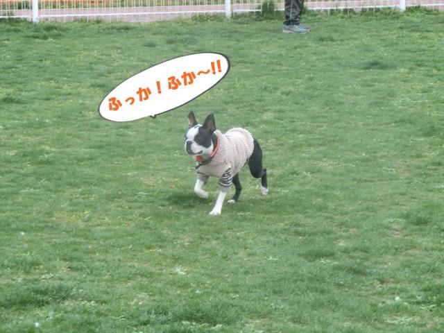 2011_0403_160424-CIMG4561.jpg