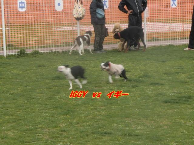 2011_0403_161645-CIMG4570.jpg