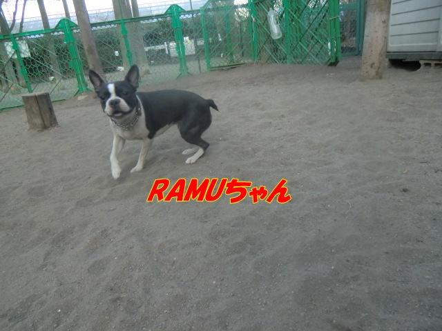 2011_0406_174148-CIMG4594.jpg