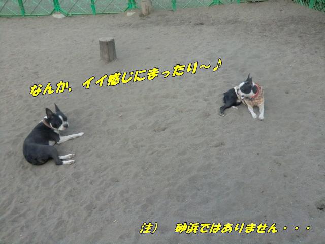 2011_0406_174247-CIMG4597.jpg