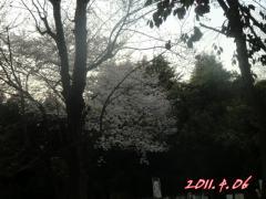 2011_0406_174705-CIMG4600.jpg