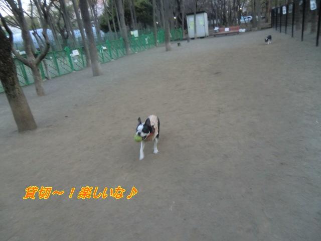 2011_0406_175206-CIMG4601.jpg