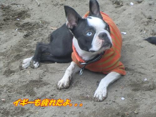 2011_0408_133613-CIMG4624.jpg