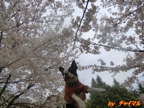 2011_0408_142259-CIMG4627.jpg