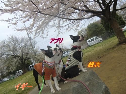 2011_0408_142435-CIMG4630.jpg