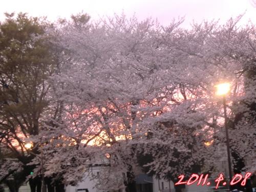 2011_0408_181226-CIMG4647.jpg