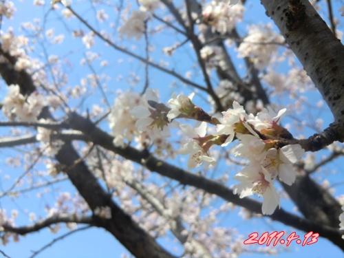 2011_0413_111124-CIMG4695.jpg