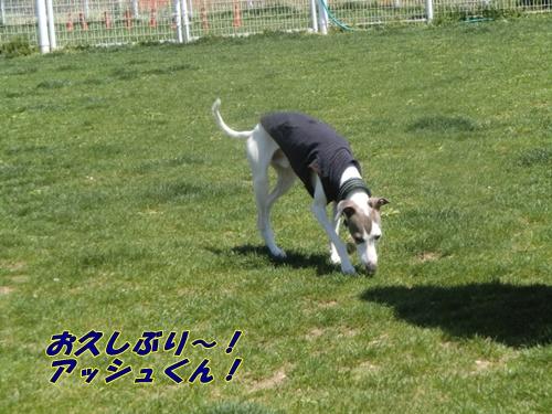 2011_0413_113203-CIMG4706.jpg
