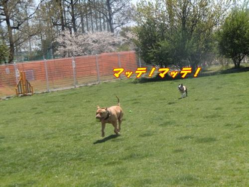 2011_0413_113752-CIMG4709.jpg