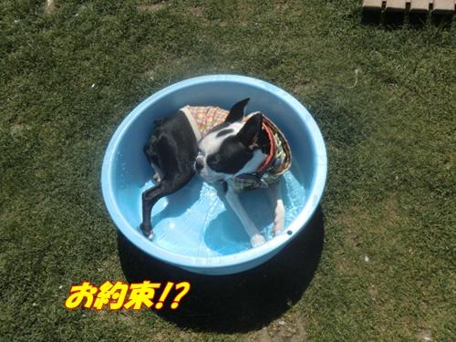 2011_0413_114740-CIMG4711.jpg