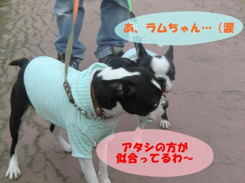 2011_0505_162747-CIMG5033.jpg