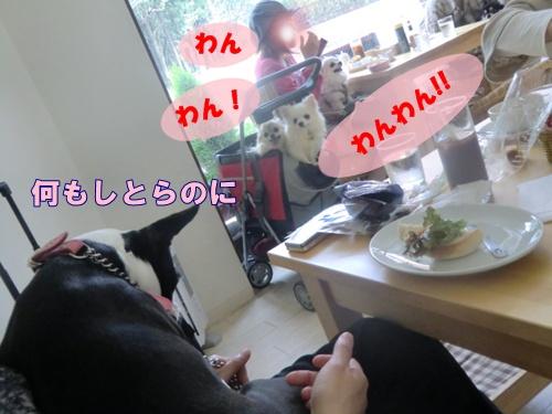 2011_0514_141542-CIMG5114.jpg